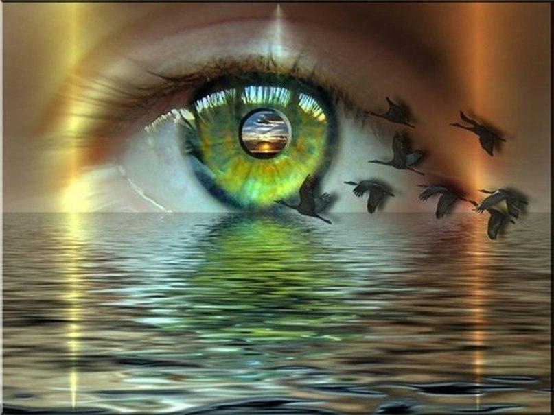 глаз и птицы