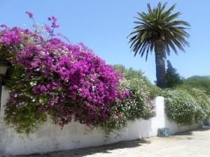 тунис-сайт-природа