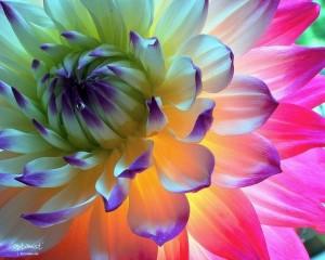 обалденный цветок